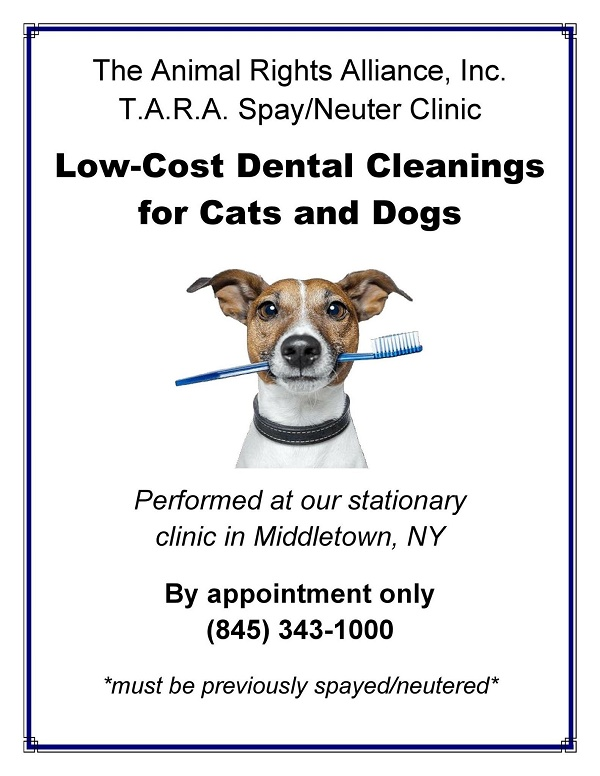 T.A.R.A. Low Cost Dental Cleanings