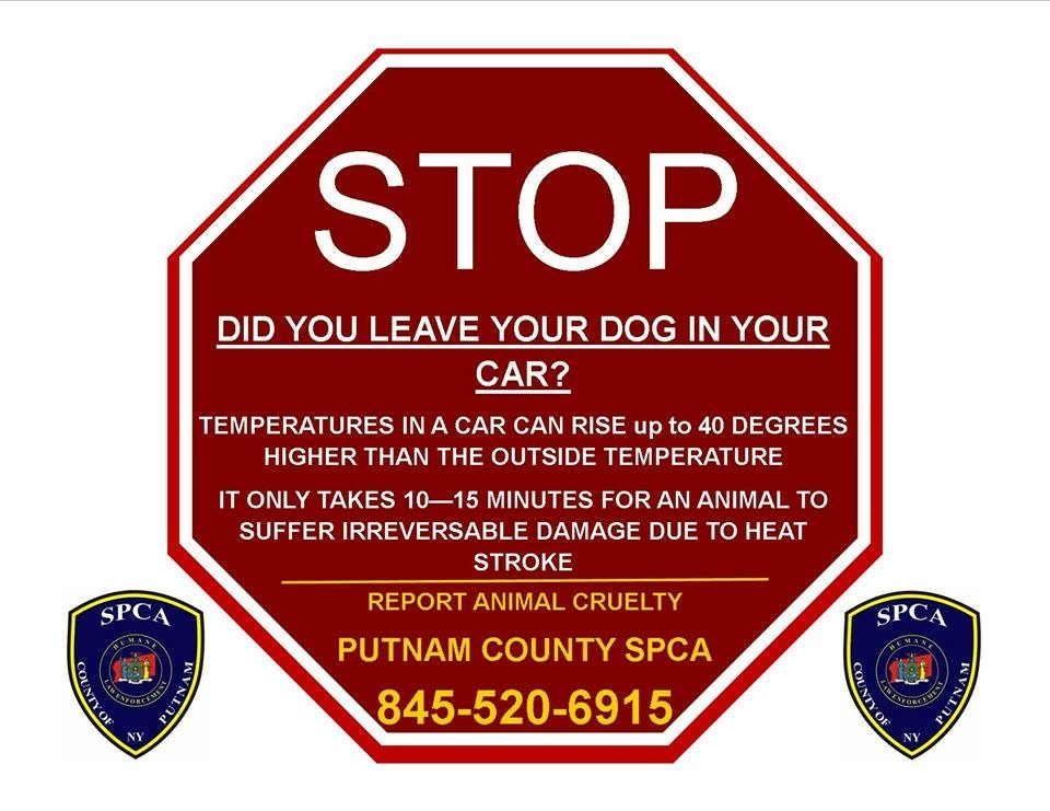 Dogs in Cars Warning